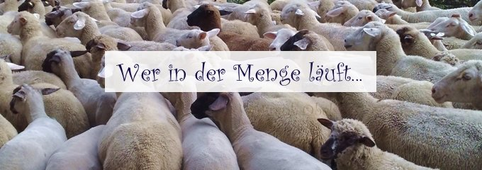 Wer in der Herde läuft – so funktionieren nicht nur Schafe!