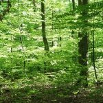 Forest Bathing - Wellness-Therapie im Wald
